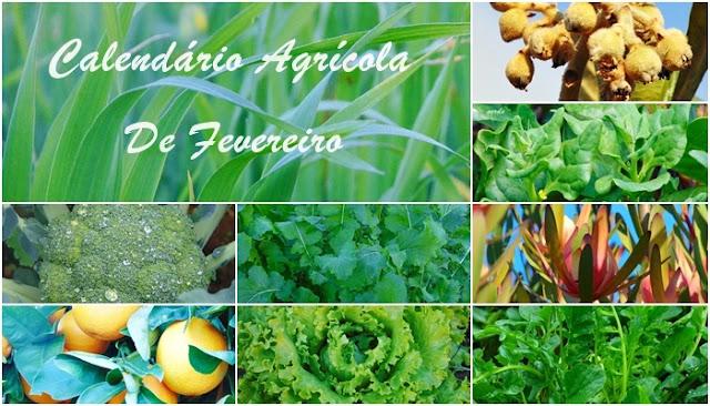 Calendário Agrícola de Fevereiro sementeiras e plantações