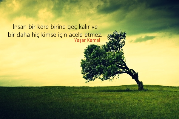 ağaç, yeşil alan, gökyüzü, güzel sözler, özle sözler, huzur
