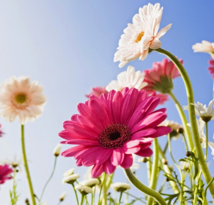 Lovely Hd Flower Wallpapers For Tablet PC