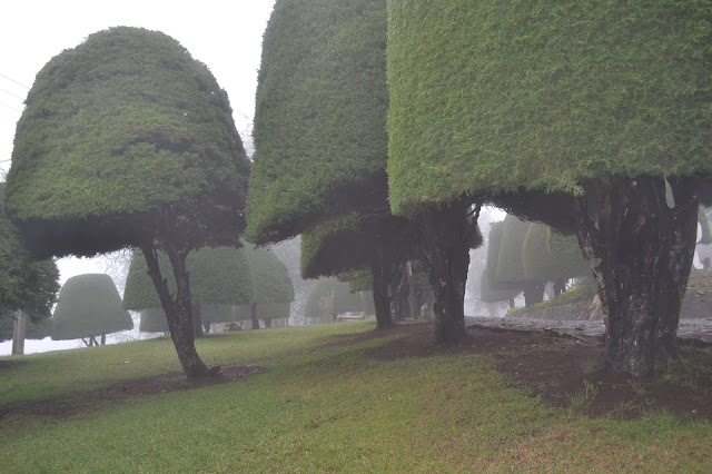 Wisata Bukit Jamur Bandung