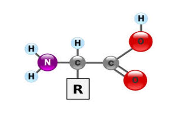 "Laporan Biokimia ""asam amino"""