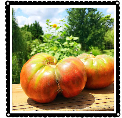 The Black Krim Tomato and Why it is my Favorite
