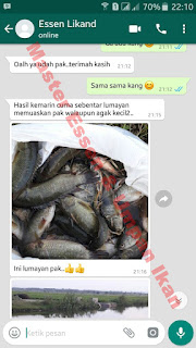 Umpan Serbuk Ikan Nila Terbaik