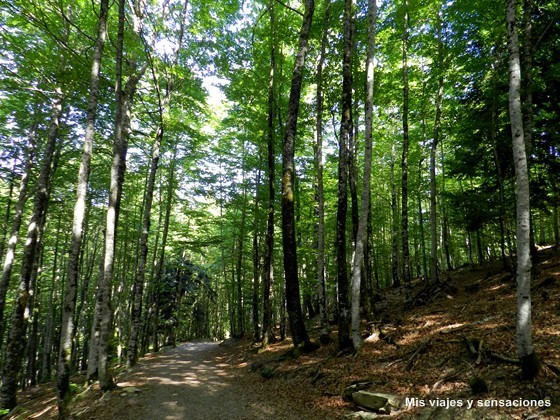La Selva de Irati, Navarra