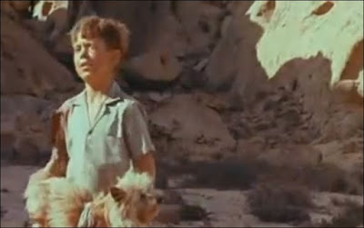 Dirkie Attacked By A Snake In Lost in the Desert