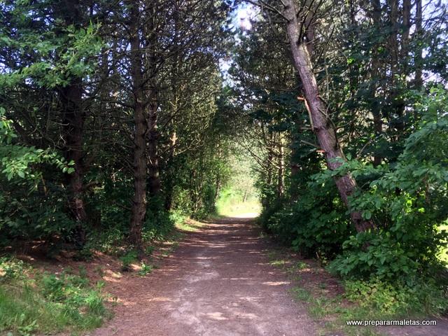bosques daneses