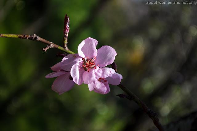 Pomi incarcati cu flori