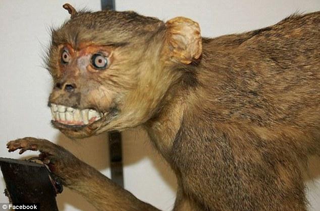 the animal zone get stuffed the disturbing animals created when