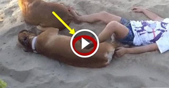 ماذا فعل الكلب بهذه الفتاة وهي نائمة؟ شاهدوا ماذا فعل..