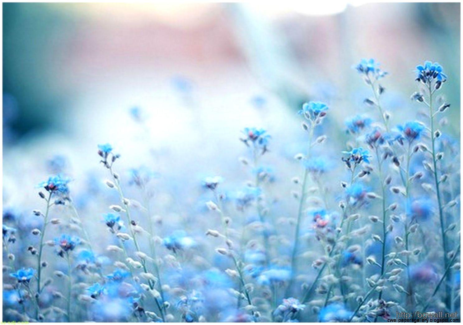 Blue Flower Background Tumblr