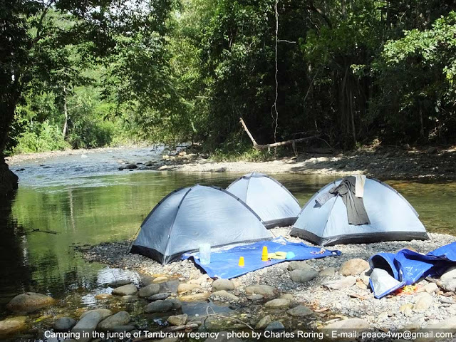 Camping by a river in a rainforest