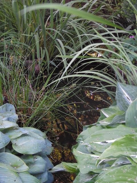 byliny nad wodą
