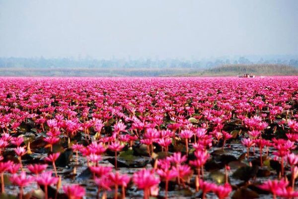 The Lake of Red Water Lilies