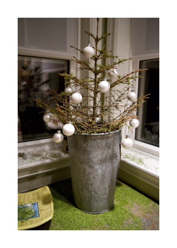 HOW TO STOP CHRISTMAS TREES FROM DROPPING THEIR NEEDLES |The Garden ...