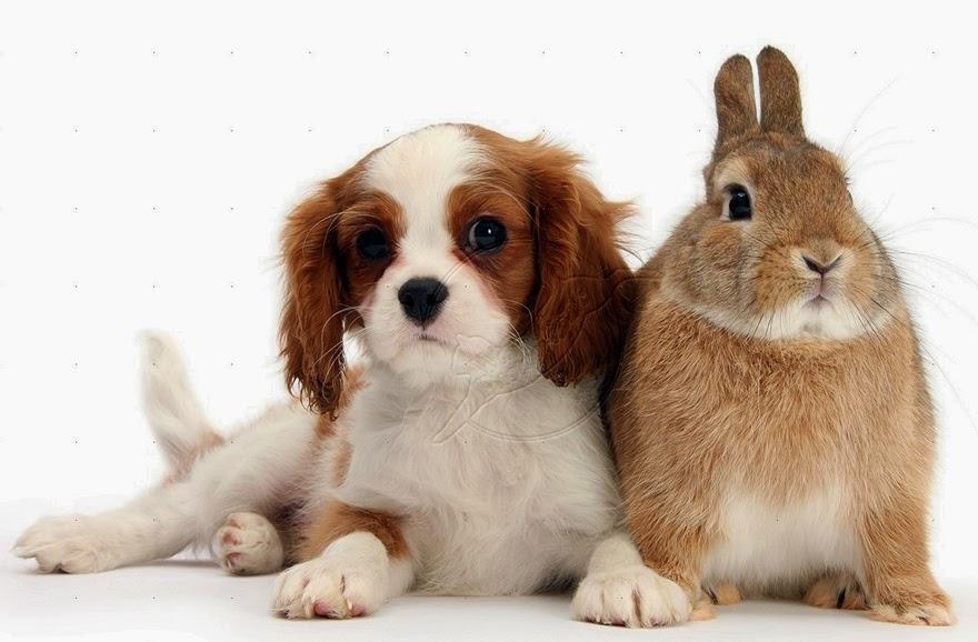 Foto Anjing Dan Kelinci Berpose Lucu  Gambar Foto Kelinci