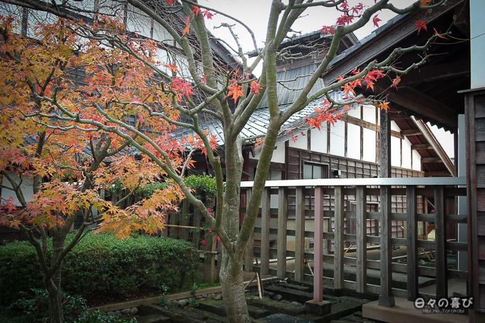 vue sur les arbres dans la cour