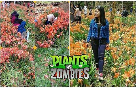 Meme Lucu ABG Perusak Kebun Bunga Amaryllis