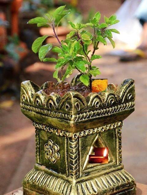 हर हिन्दू औरत तुलसी की पूजा क्यों करती है ?