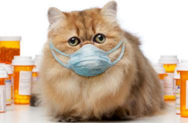 enfermedades-contagiosas-de-los-gatos-vacunas