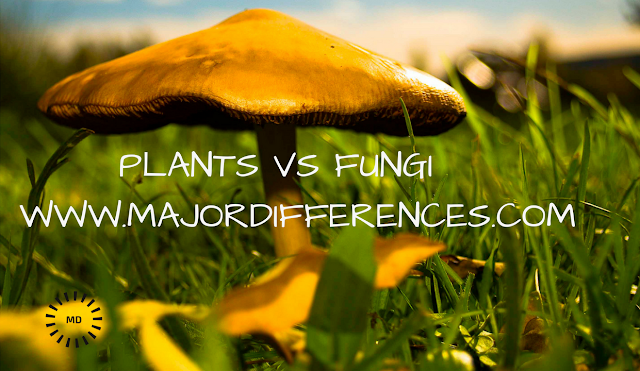 Differences between Plants and Fungi (Plants vs Fungi)