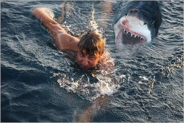 Atak W Nowej Zelandii Film Gallery: I Spy Animals: Can Dolphins Stop A Shark Attack?
