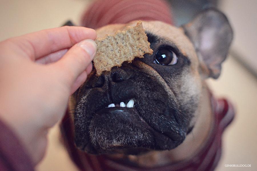 Rezept: Pansen-Frischkäse Hundekekse selbst backen