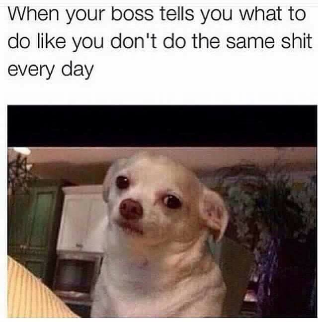 When your boss tells you what to do like you dont do the same shit every day