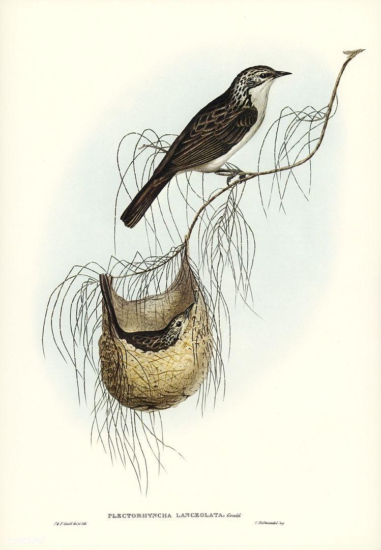Pássaros em Ilustrações Incríveis