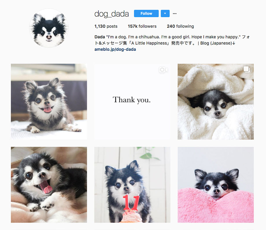 Instagram Dog Dada