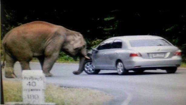 Слон и тойтота виос