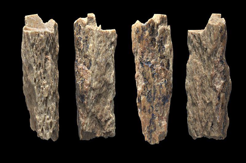 Fragmento de hueso de la cueva de Denisova de donde se ha obtenido el ADN secuenciado. Foto: Thomas Higham/University of Oxford