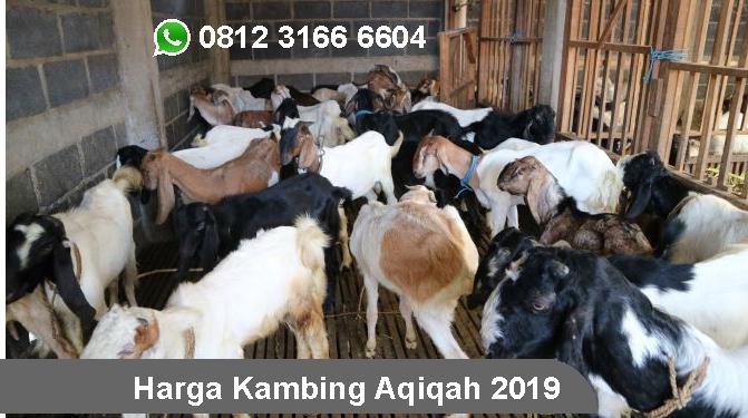 Harga Kambing Aqiqah Surabaya 2019