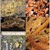Forma mais antiga de vida é descoberta na Tasmânia
