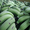 Which Banana Would You Eat Your Answer May Have An Effect On Your Health