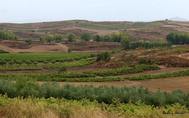 Viñedos, La Rioja Alta