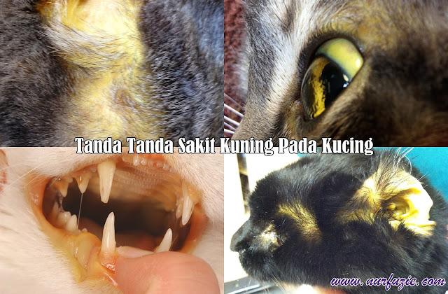 tanda tanda sakit kuning pada kucing