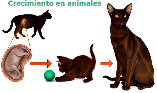 crecimiento en animales y humanos'