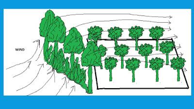 wind break, horticulture, orchard
