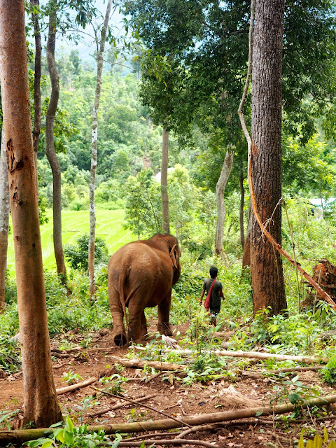 Elephant sanctuary near Chiang Mai, north Thailand