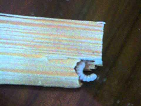 كيفية علاج سوس الخشب بأحدث الطرق