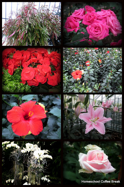 A Longwood Gardens PhotoJournal, Part One on Homeschool Coffee Break @ kympossibleblog.blogspot.com