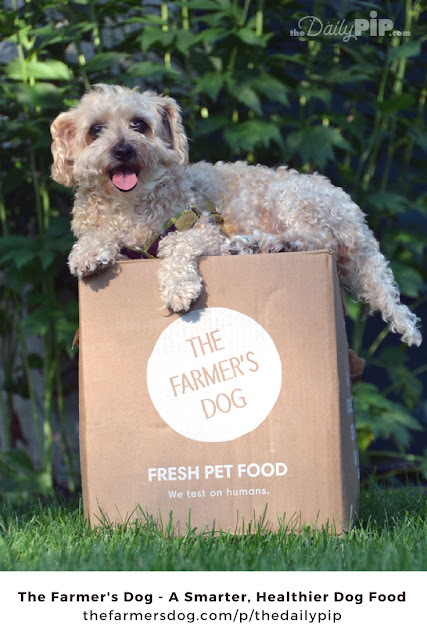 The Farmer's Dog is a personalized, ready-to-serve, subscription-based dog food made from real ingredients