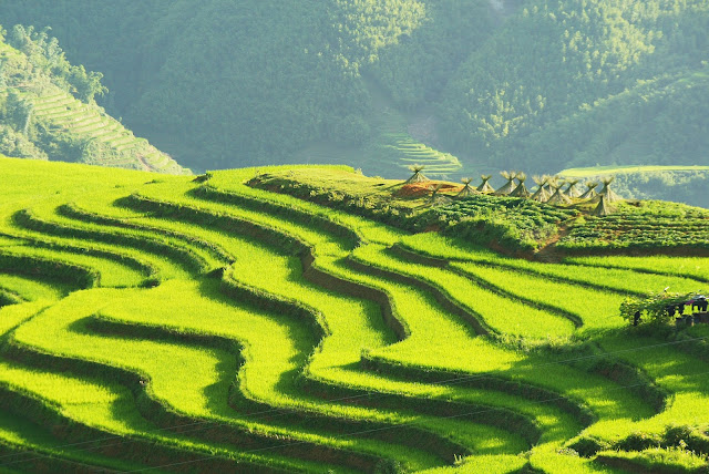 Sapa rice terrace 1