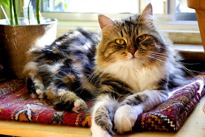 Cute Cats Kitty Pets 01