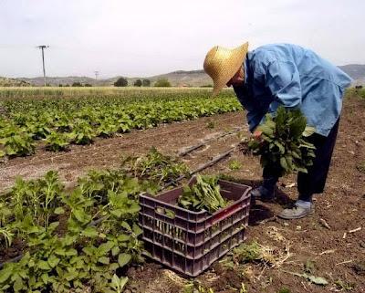 τα κέρδη των αγροτών
