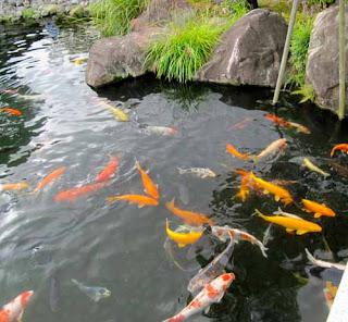 Koi Pond Koko-en Gardens Himeji Japan