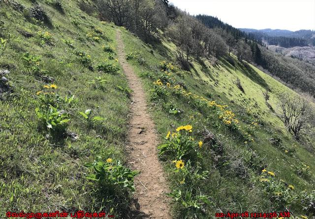 Oregon White Oak Plant NRCA