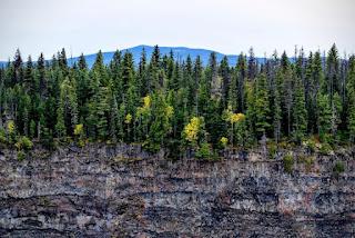 Forêt et falaise
