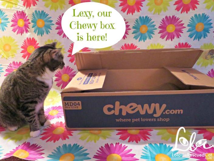 Catit Scratcher|Chewy.com
