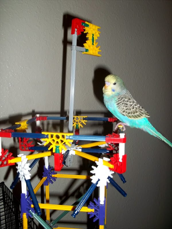 Budgies are Awesome: January 2012